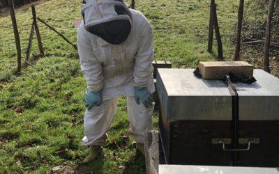 La ruche Abeilles & Cie en février