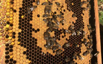 La ruche Abeilles & Cie en mars