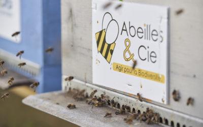 Que se passe-t-il dans la ruche Abeilles & Cie en avril ?