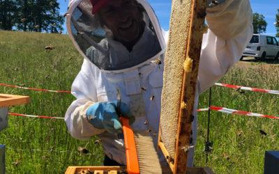 La récolte de miel au Pays basque – de la ruche au pot !