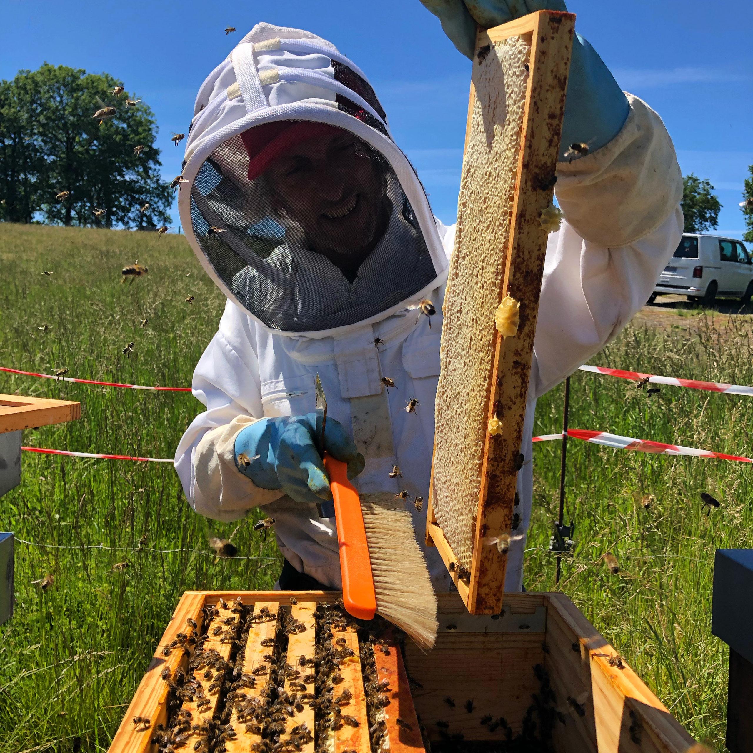 recolte de miel