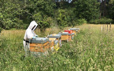 Que se passe-t-il dans la ruche en juin ?