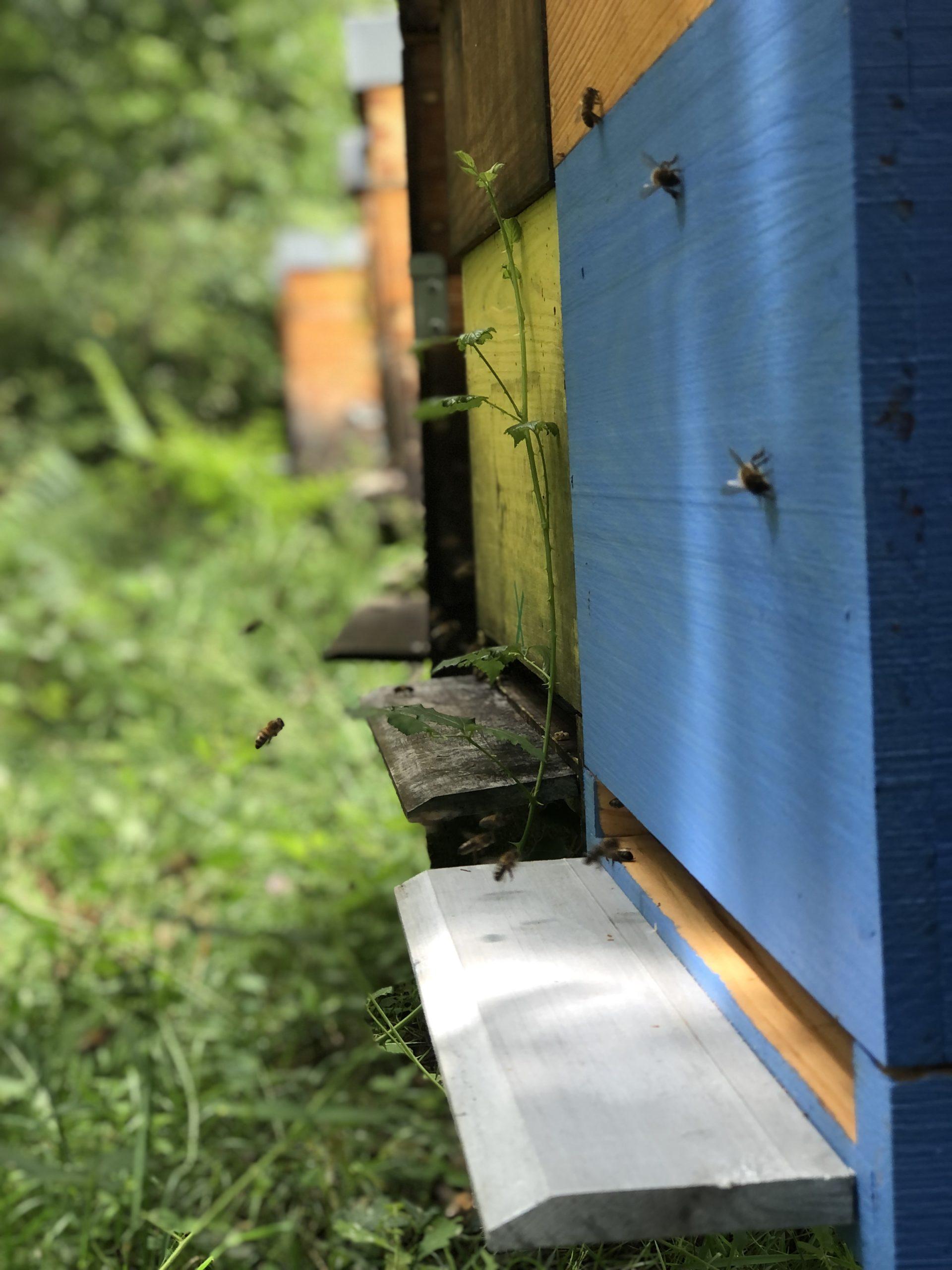 ruche en juillet