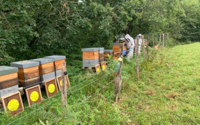 Que se passe-t-il dans la ruche en août ?