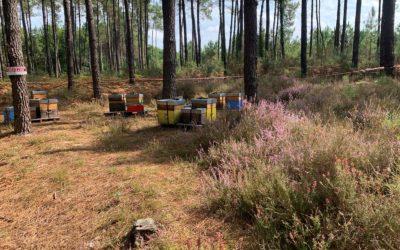 Que se passe-t-il dans la ruche en septembre 2021 ?