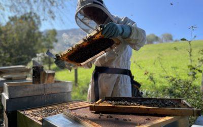 Que se passe-t-il dans la ruche en octobre 2021 ?